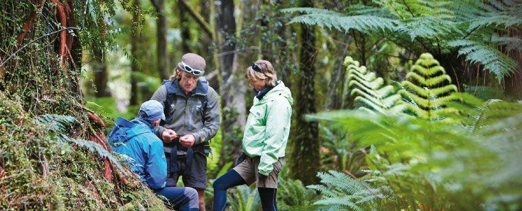 Guided Walks Fiordland National Park